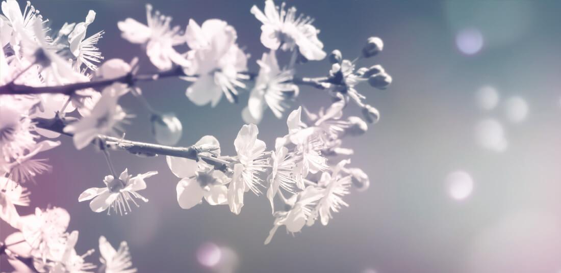 Winterblüh'n Kreativkurs